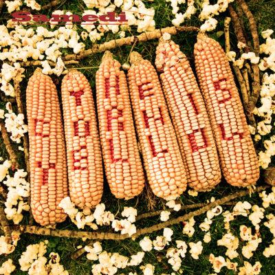 Bertrand Grave. Música y Audio. Samedi. The Corn is Yellow. 2016.